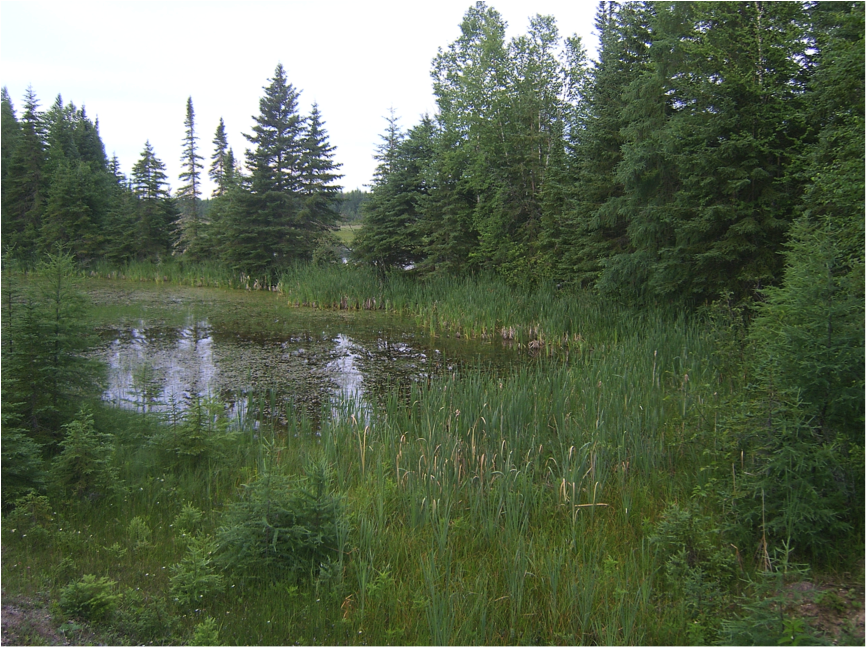 Canadian wetland, near Fraserdale, Ontario. Boreal wetlands like this, often made or enhanced by beaver dams, are very extensive and emit much methane in summer.
