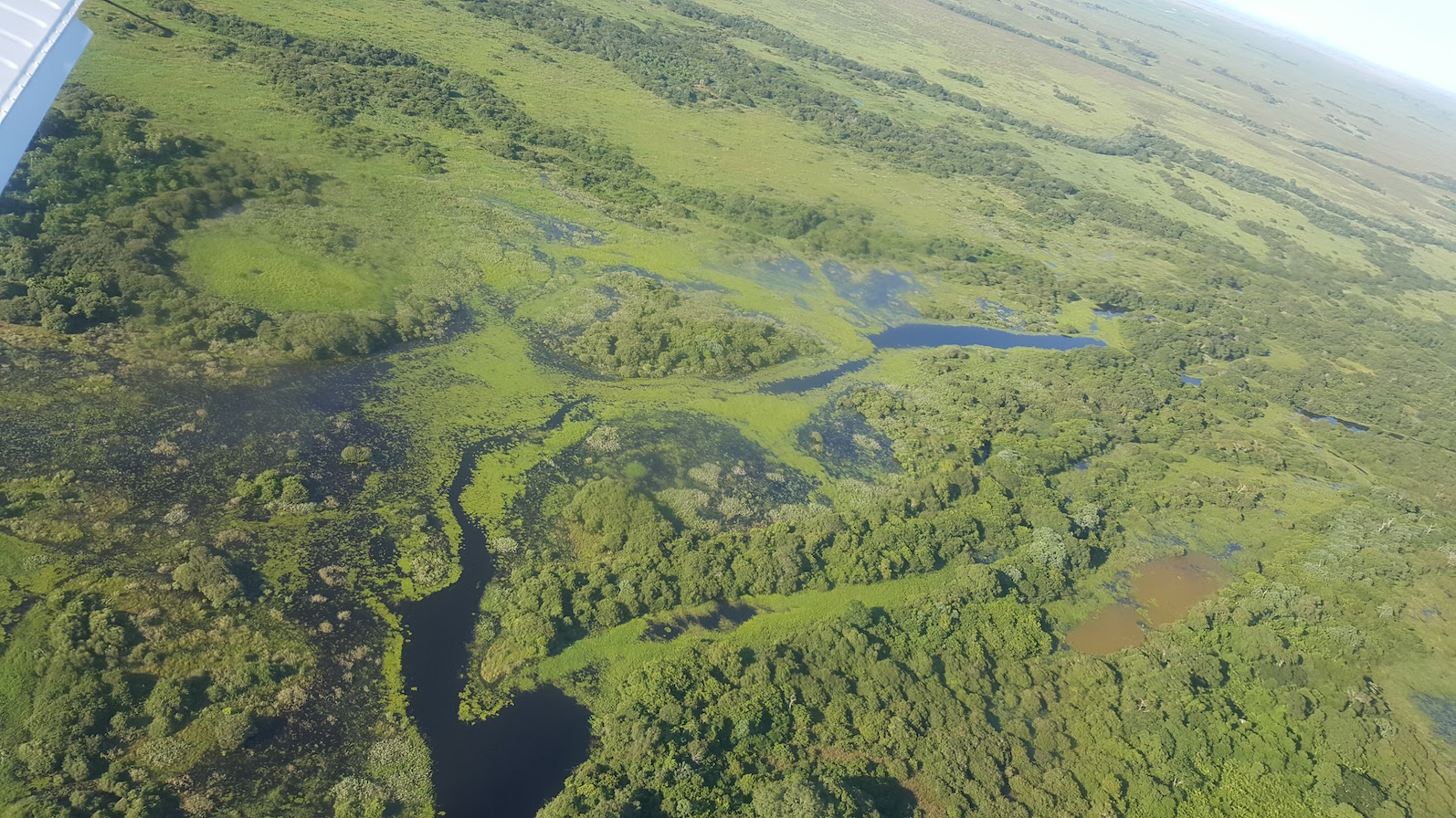 An area of flowing water in the Pantanal