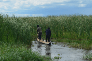 Fig. 10 Boatmen in the reed beds