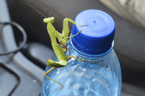 Fig. 5 Mantis on water bottle
