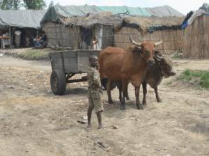 Fig. 6 Ox cart and children in the camp