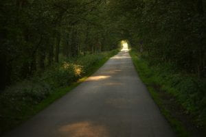 Picture of long straight woodland road with light at the end