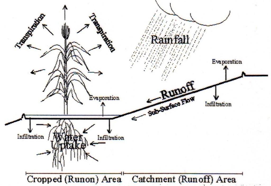 Rainwater harvesting (r.w.h.) (Matamata Plateau, Tunisia)