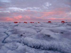 algae on surface of Greenland ice sheet