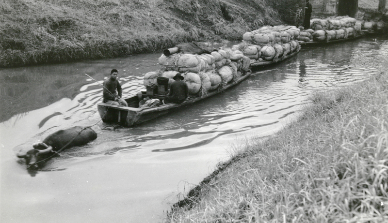 Barges towed by a water buffalo