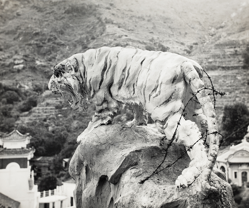Tiger, Aw Boon Haw Gardens, Hong Kong, c.1952, Love collection, BL05-32.