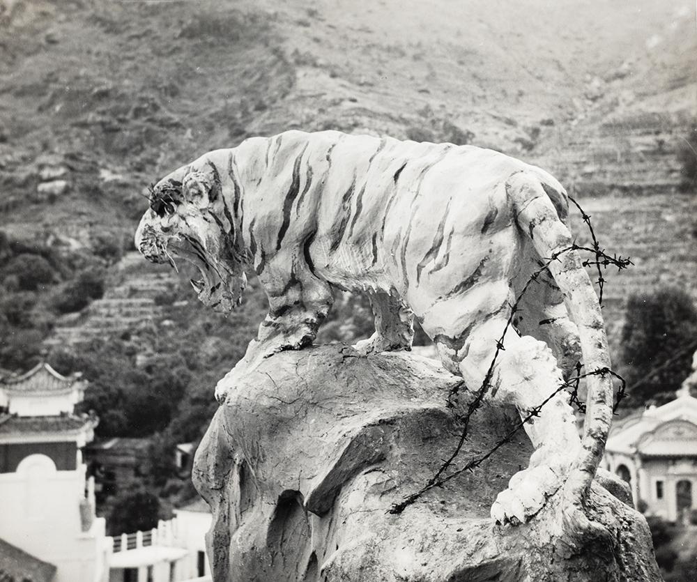 Tiger, Aw Boon Haw Gardens, Hong Kong, c.1952, Love collection, BL05-32.