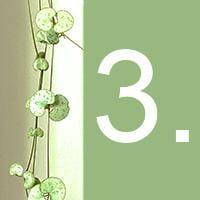 The heart-shaped leaves of an indoor plant and the number 3 against a green background.