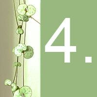 The heart-shaped leaves of an indoor plant and the number 4 against a green background.