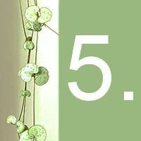 The heart-shaped leaves of an indoor plant and the number 5 against a green background.