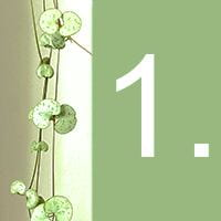 The heart-shaped leaves of an indoor plant and the number 1 against a green background.