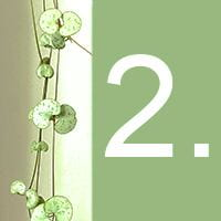 The heart-shaped leaves of an indoor plant and the number 2 against a green background.