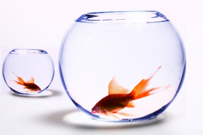 Two Fishbowls with gold fishes in