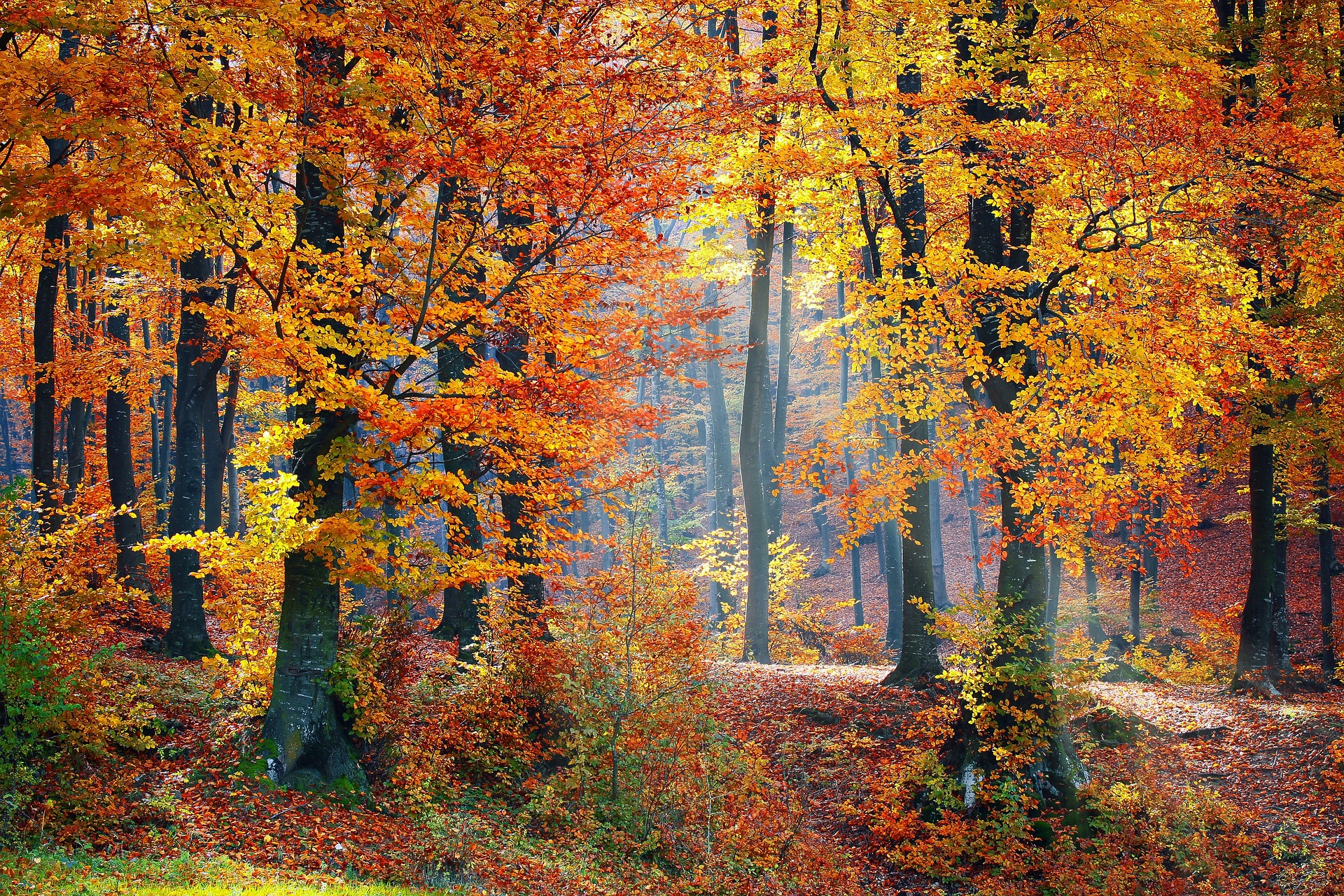 Image shows a wooded clearing with sun filtering down through the trees, in autumn colours.