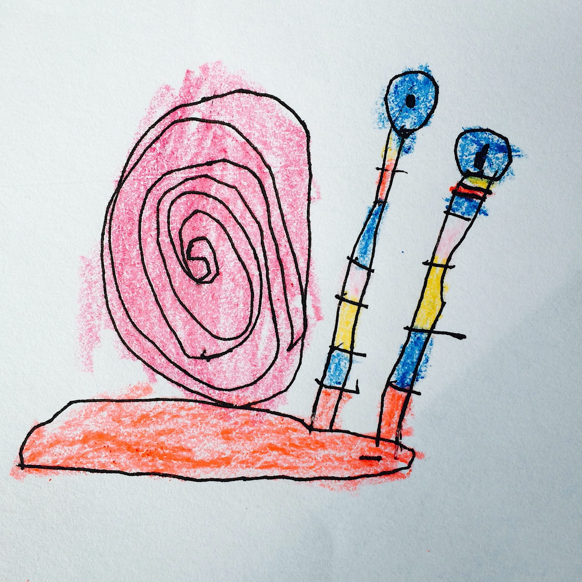 drawing of a snail