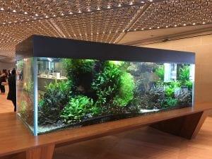An aquarium in the pantry