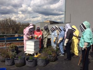 bee team around hive