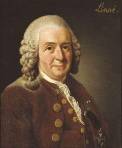 Carl von Linné, Alexander Roslin, 1775