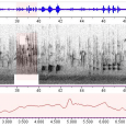 AVoCet is an extensive global database of birdsong field recordings with interesting graphical sound analysis. Link