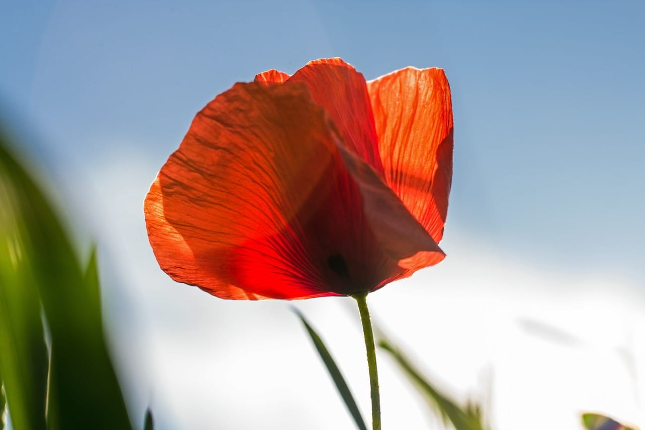 University Launches Armistice 100 Poetry Competition