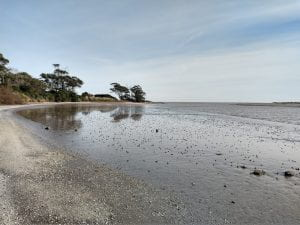 Crab collection location at a muddy coastal inlet at San Clemente del Tuyú, 400km south of Buenos Aires on the South Atlantic coastline of Argentina.