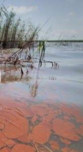 image showing oil reaching the Loiusiana coast