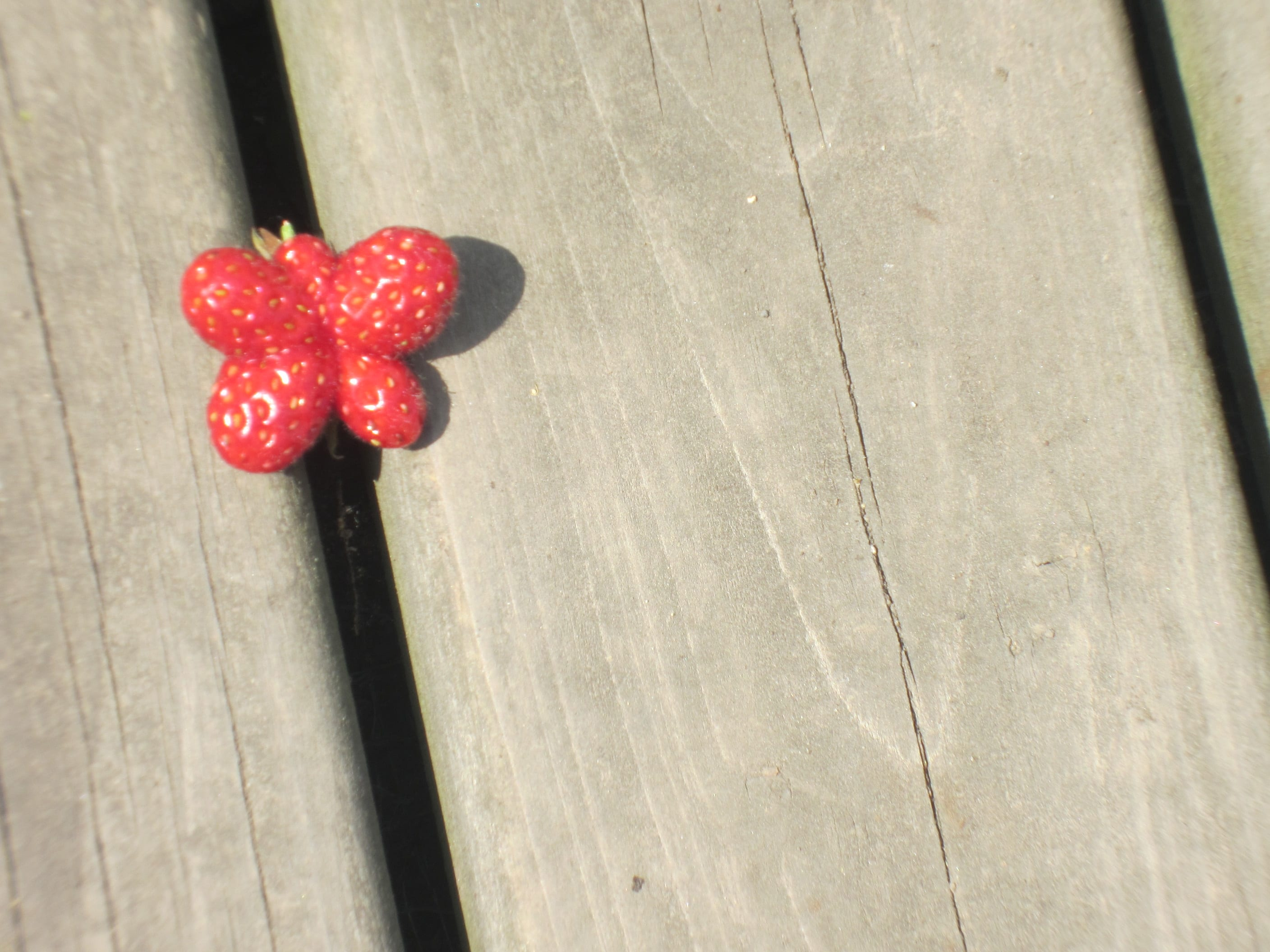 image of a strawberry shaped like a butterfly
