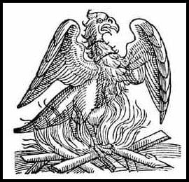phoenix rising engraving