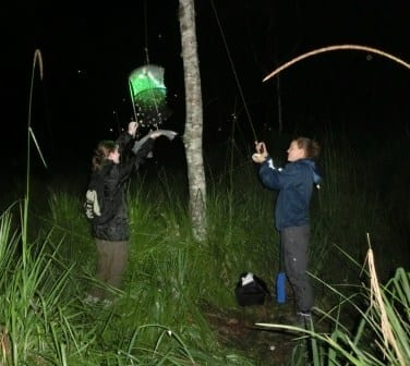 Inspecting the moth traps