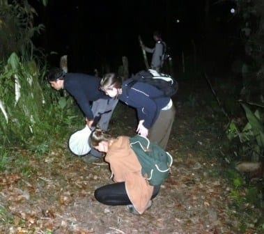 Exploring the forest at night - katydid hunt