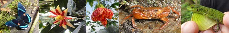 ecuador-banner-flora-and-fauna3s