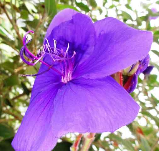 Amazing plant life!