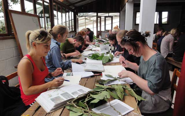 Tropical plant identification practical