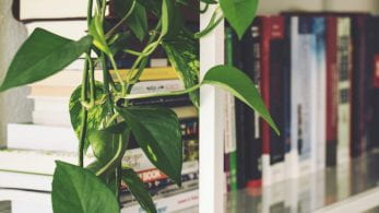 Close up of a bookshelf and a plant.