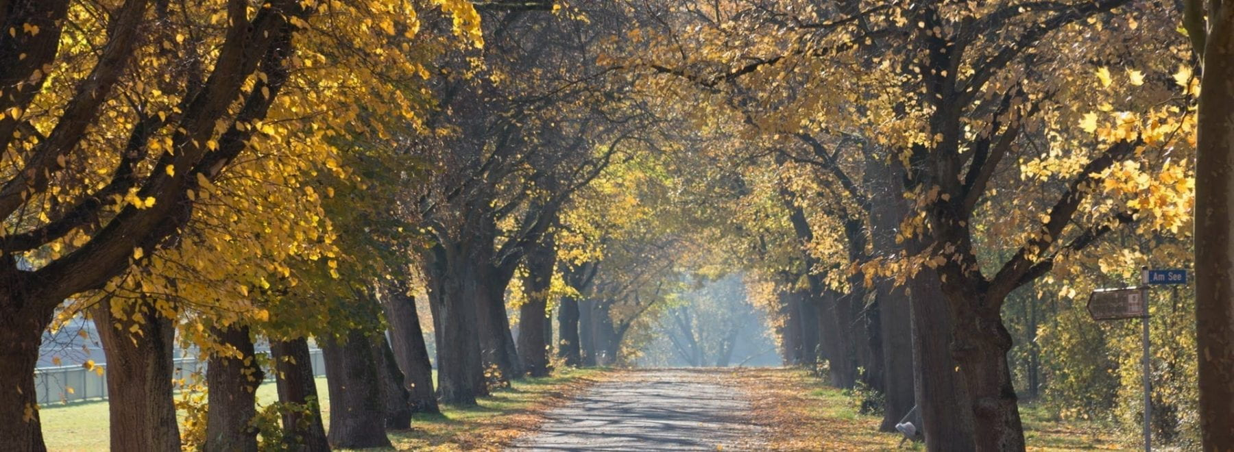 A pathway surrounded by trees in autumn.