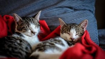 Two cats asleep on a blanket.
