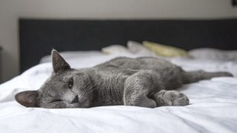 cat laying down on a bed