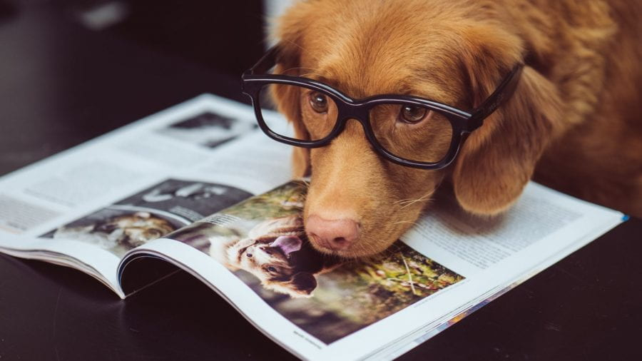 Dog wearing glasses reading a book