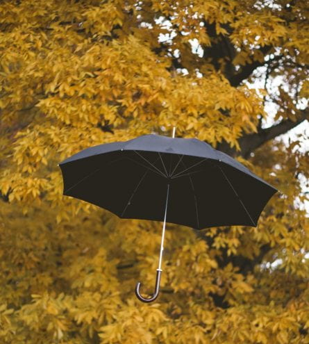 An umbrella caught in a tree