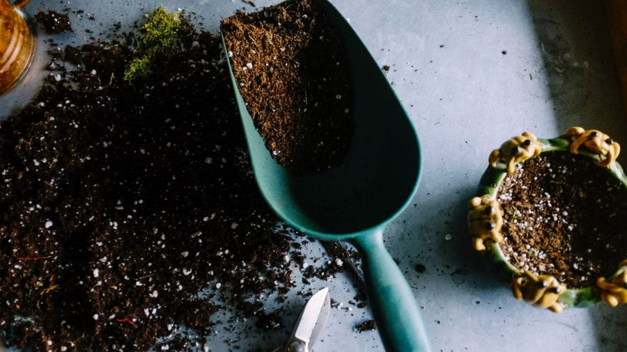 Preview image for the article How gardening can improve your mental health.