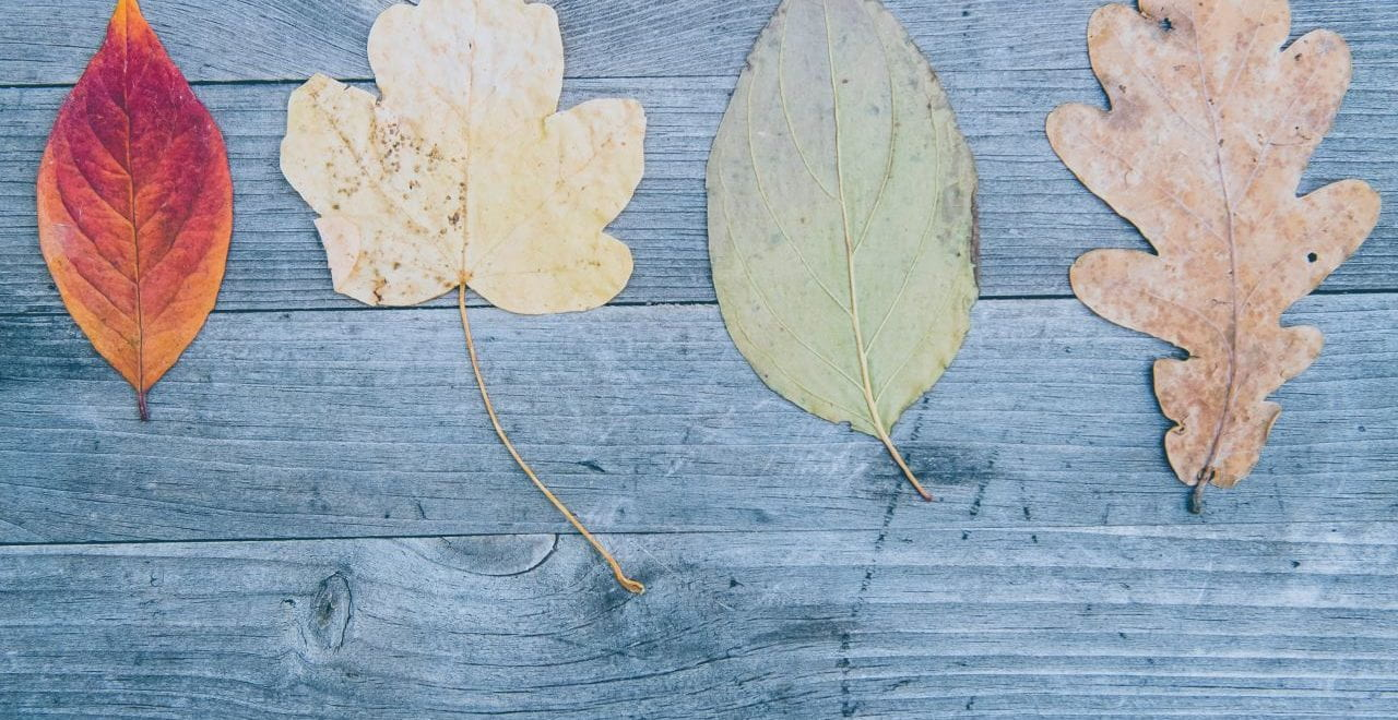 autumn leaves placed on a wooden bench