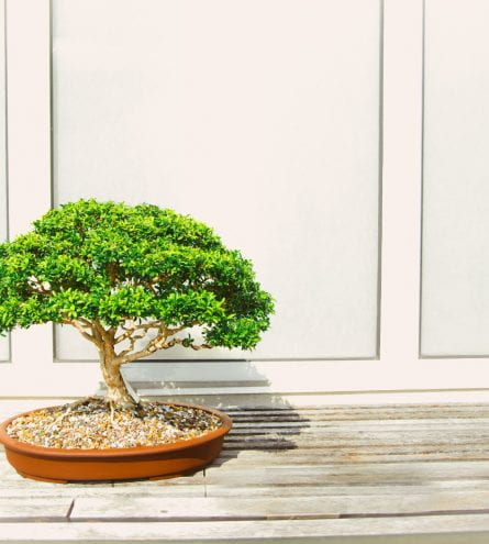 a small bonsai tree sat in a pot on the floor