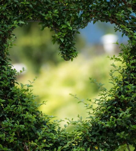 Heart cut into a bush
