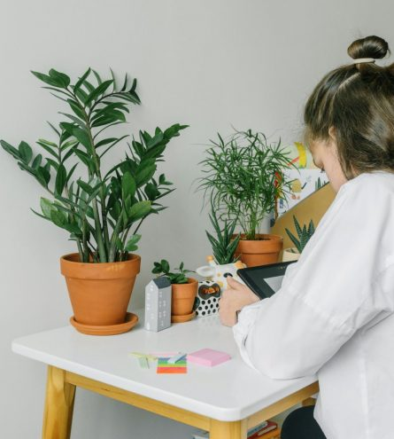 Someone sat at a desk surrounded by plants