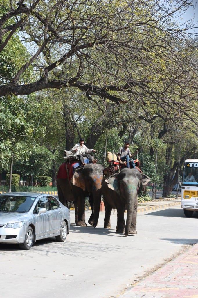 Elephants on the street