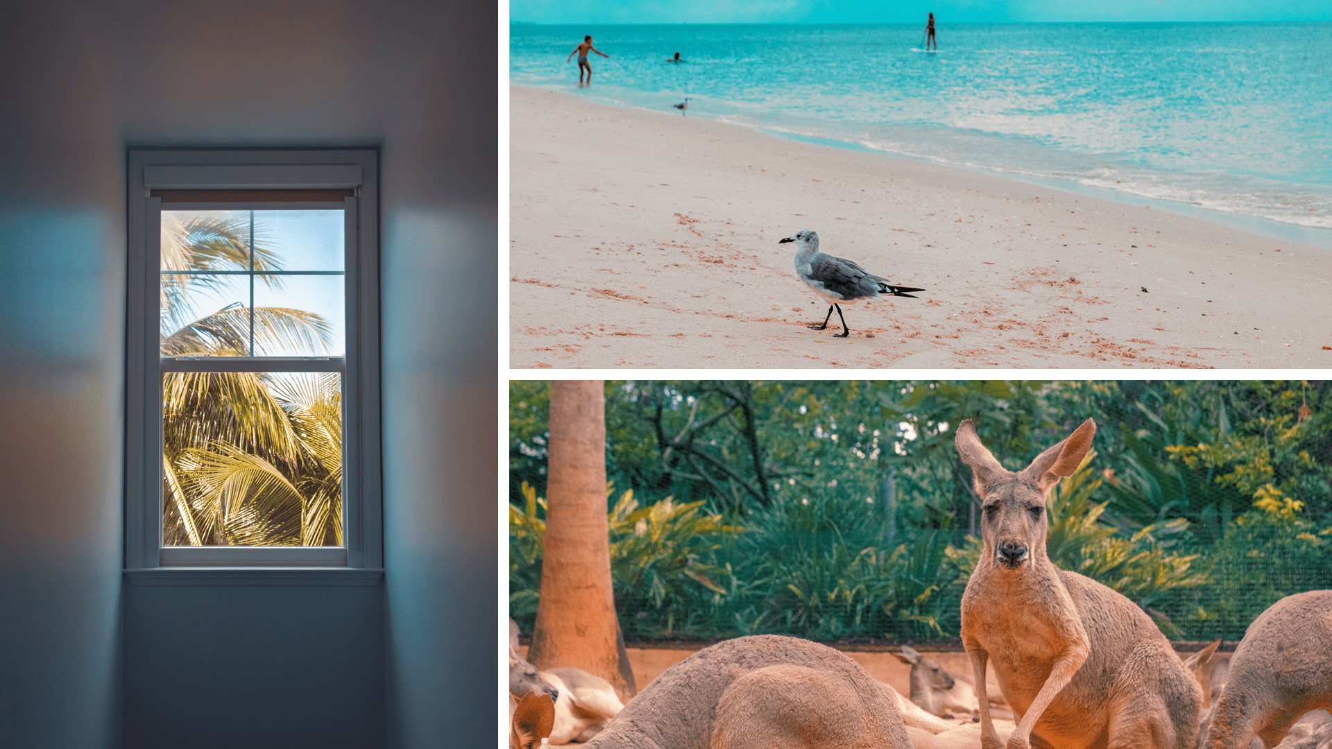 3 photographs from Florida, an open window, a seagull on a beach and a kangaroo.
