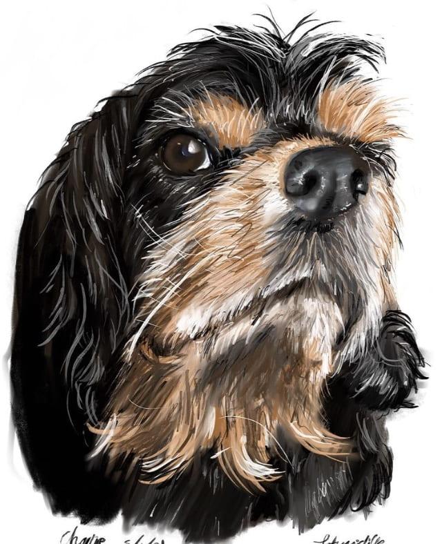 Pet portrait, first attempt using IPad as an art medium