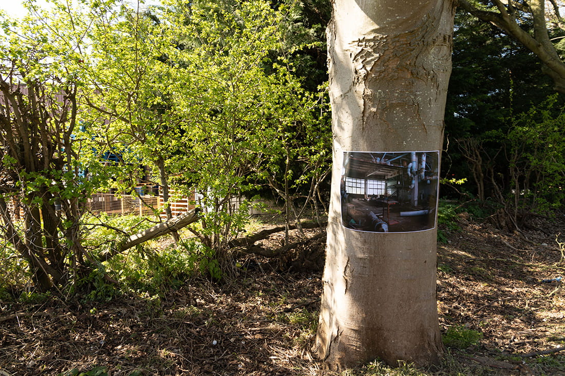 A photograph showing a tree with a photograph pinned to it.