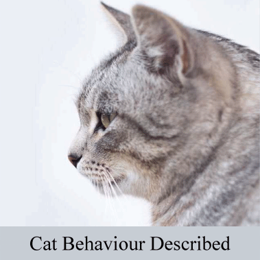 Cat Behaviour Described