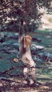 Monkey feeding